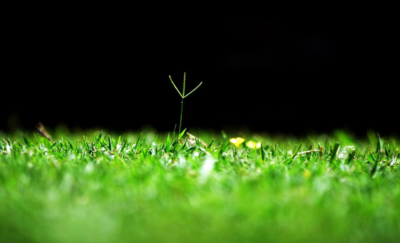 Kupujemy drzewka iglaste – na co zwrócić uwagę