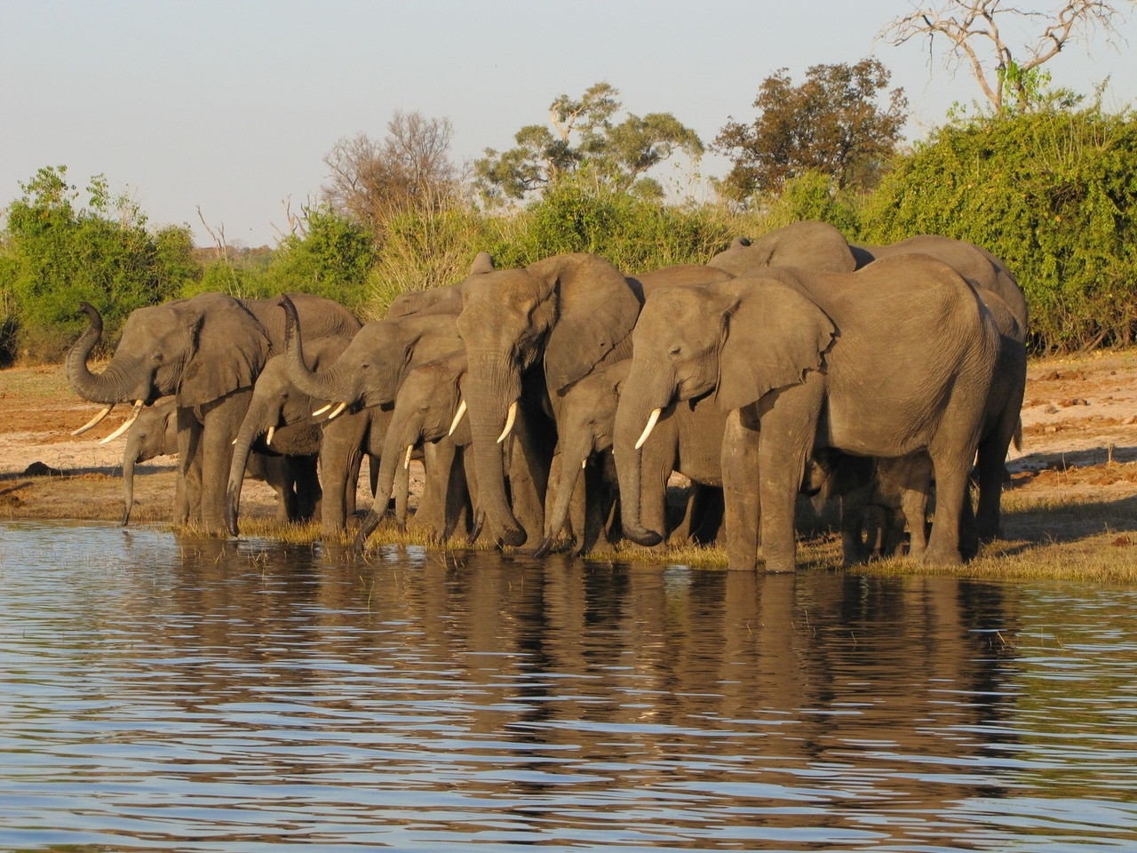 Poczujcie moc dzikiej Afryki